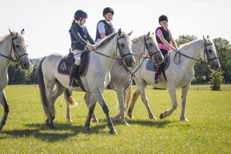 Horseriding in Athy, Co. Kildare