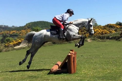 Specialized Competitive Show Jumping Coaching
