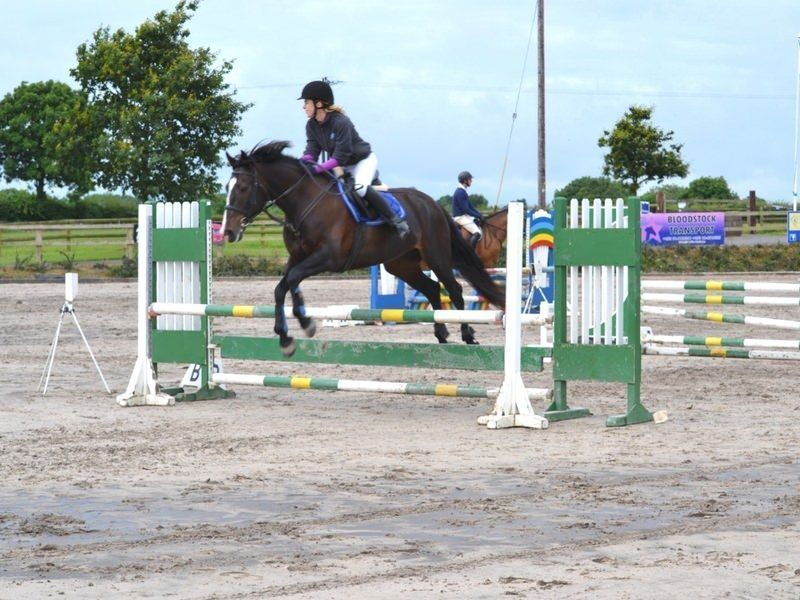 Horse jumpying adult equestrian horse riding in ireland
