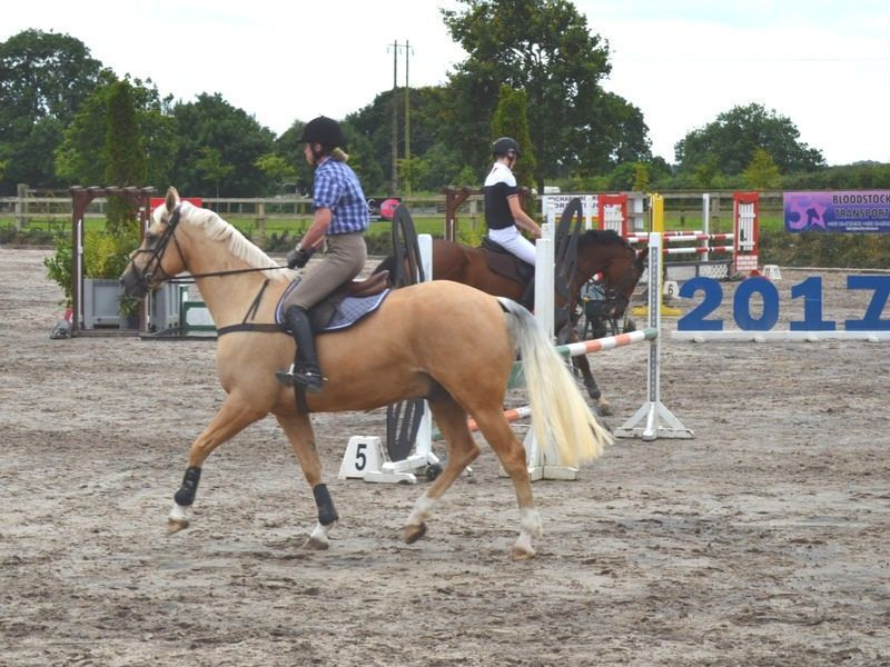 adult equestrian horse riding in ireland