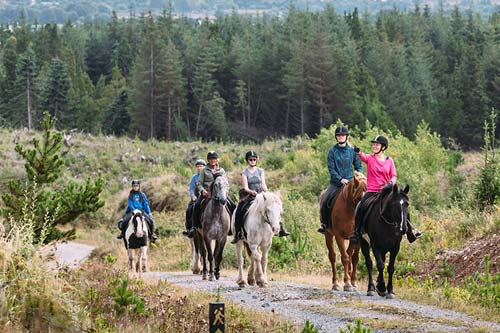 equestrian horse riding hacks ireland