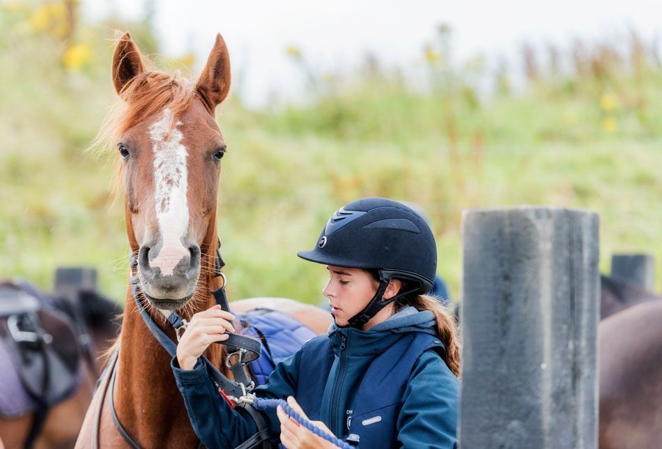student taking care of horse at englisgh and equestrian camp ireland